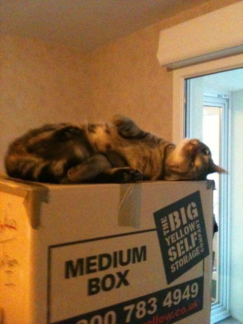 chaton mignon sur carton